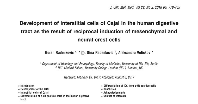 Development of Interstitial cells of Cajal in the human digestive tract as the result of reciprocal induction of mesenchymal and neural crest cells