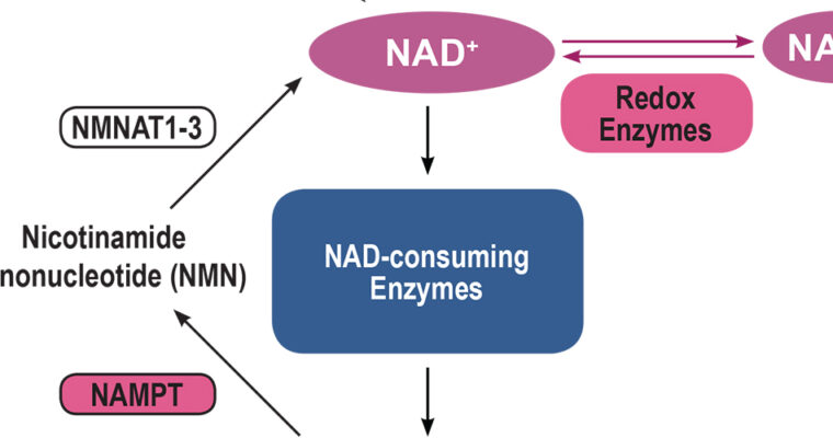 Clinical Evidence for Targeting NAD Therapeutically